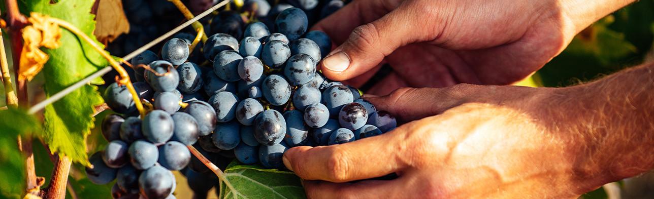 -10% sur le Côtes de Provence Rosé Mai 2021